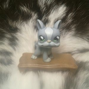 Littlest Pet Shop Boston Terrier #857